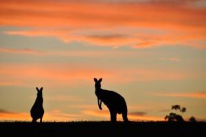 Bank Centralny Australii poprawia nastroje w poniedziałkowy poranek