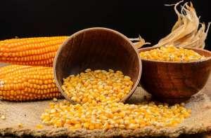 Cena kukurydzy znów przy tegorocznych minimach