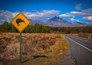 droga ze znakiem drogowym kiwi