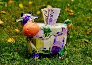 krowa skarbonka z banknotami euro