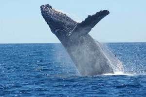 Bitcoin whales skupiły BTC o wartości 108 mln USD