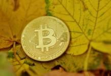 Moneta Bitcoin na jesiennych liściach