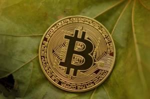 Bitcoin na liściach