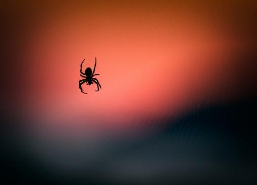 Czego pająki mogą nauczyćCięo tradingu na rynku Forex? - Justin Bennett