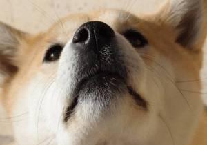 Dogecoin (DOGE): dwucyfrowe zyski. Jeden adres nadal posiada 28% łącznej podaży