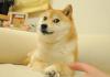 dogecoin-doge