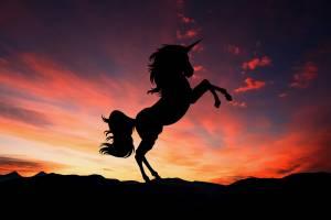 Unicorny biznesu z ostatnich miesięcy na przykładzie rynku zza oceanu